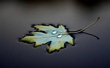 Water Leaf Drops Mac wallpaper