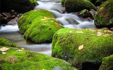 A small cascade over moss... Mac wallpaper