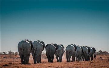 Etosha National Park Mac wallpaper
