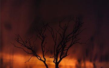 Wildfire Mac wallpaper