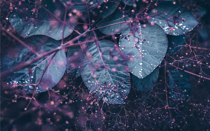 Leaves and dew Mac Wallpaper