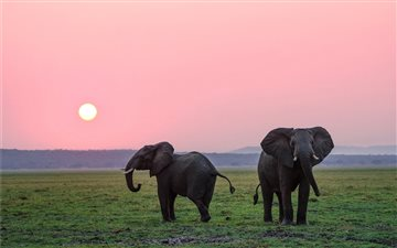 The African elephants.  Mac wallpaper