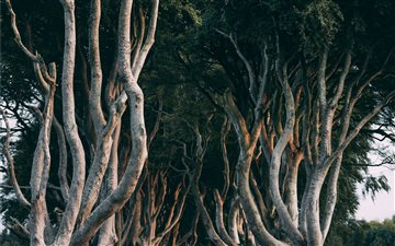 Dark Hedges, Northern Ire... All Mac wallpaper