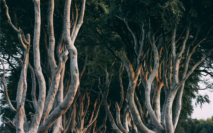 Dark Hedges, Northern Ire... Mac Wallpaper