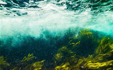 The seagrass churns under... All Mac wallpaper