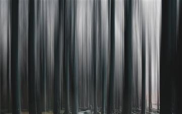 Ghost Forest All Mac wallpaper