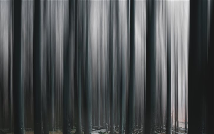 Ghost Forest Mac Wallpaper