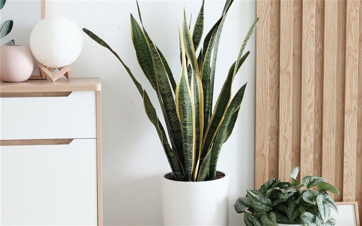 plant Mac Wallpaper