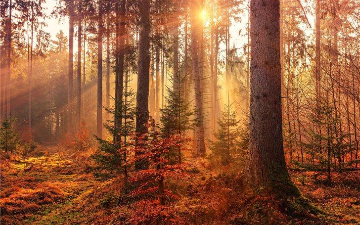 forest heat by sunbeam Mac Wallpaper