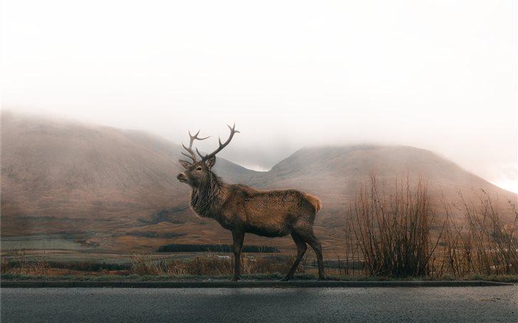 brown deer on road under gray sky Mac Wallpaper