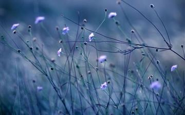 Flowers stems Mac wallpaper