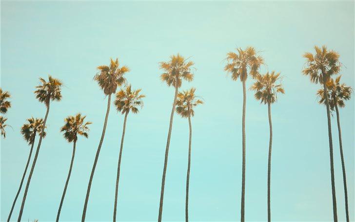 low angle photography coconut tree Mac Wallpaper