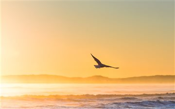 flying bird above sea All Mac wallpaper