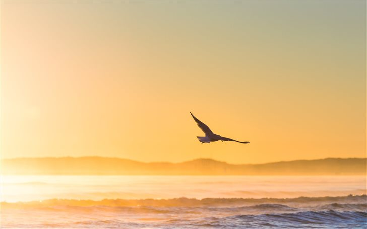 flying bird above sea Mac Wallpaper