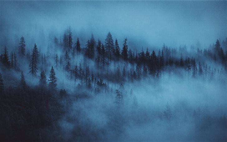 nature photography of pine trees covered by fogs Mac Wallpaper