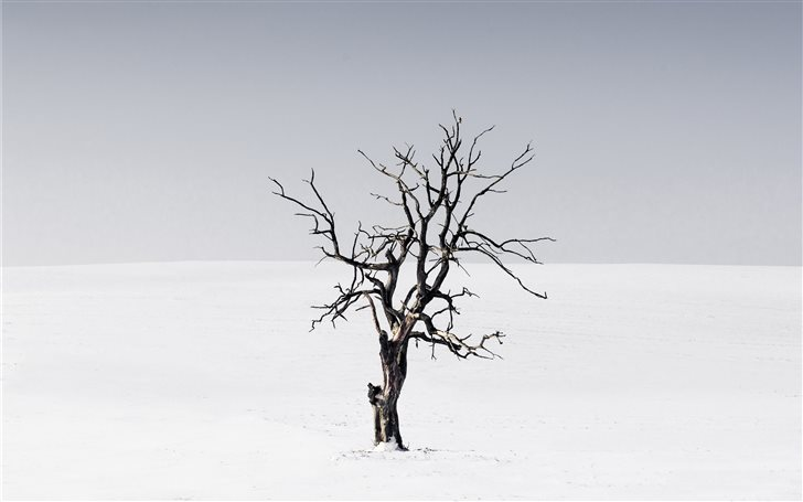 bare tree in the middle of snow Mac Wallpaper