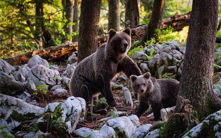 two brown bears near trees beside rocks at daytime Mac Wallpaper