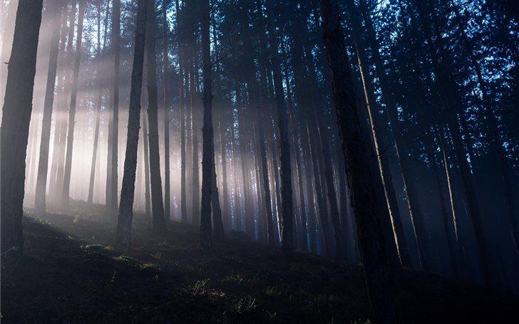 bare tree foggy scenery Mac Wallpaper