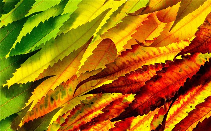 assorted color leaves Mac Wallpaper