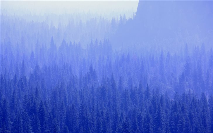 mountain with trees covered with fogs Mac Wallpaper
