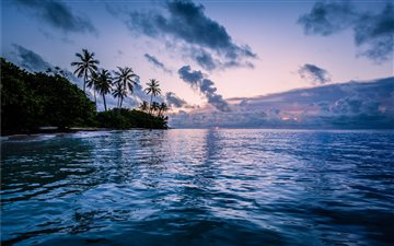 body of water near coconut trees All Mac wallpaper