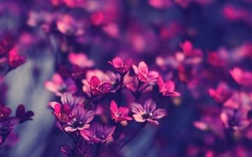 Purple wildflowers Mac wallpaper