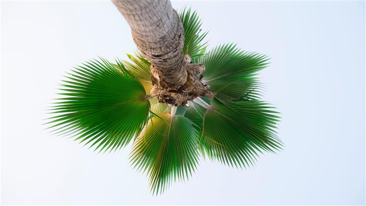low angle photography of palm tree Mac Wallpaper