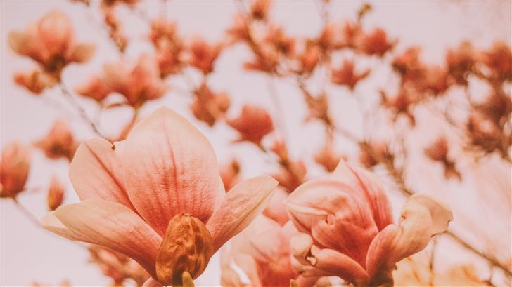 closeup photography of flowers Mac Wallpaper