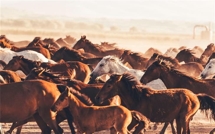 group of horses Mac Wallpaper