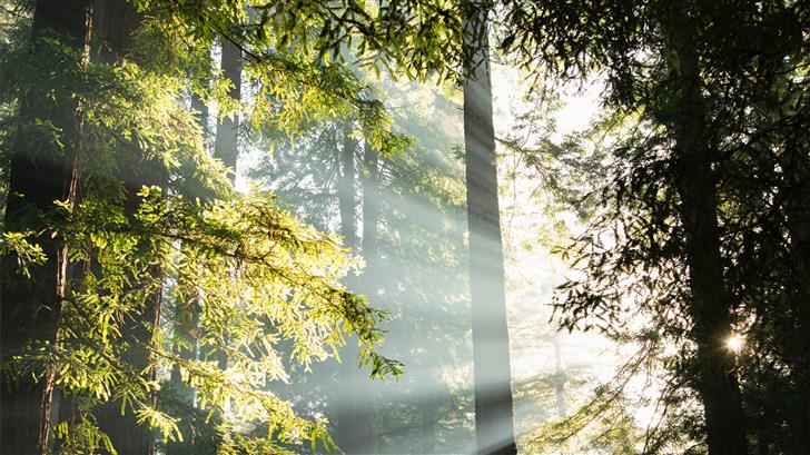green leafed tall trees with sunbeam photo Mac Wallpaper