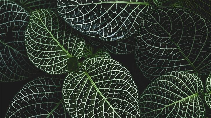 selective focus photography of fittonia plant Mac Wallpaper