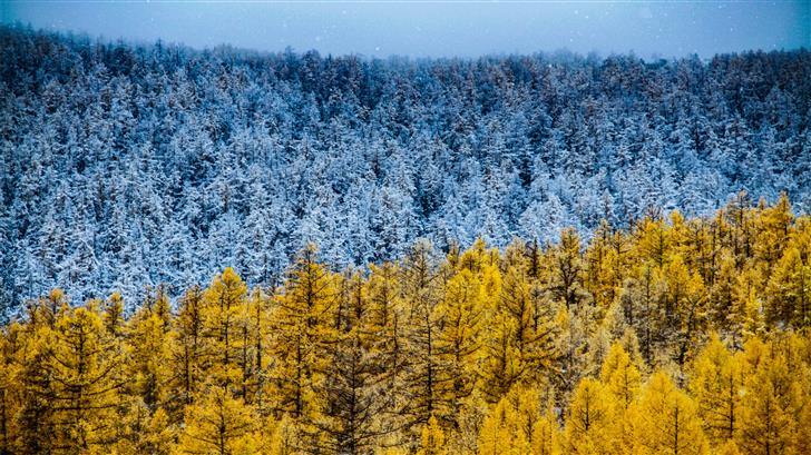 aerial photography of blue and yellow trees Mac Wallpaper