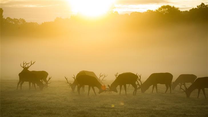 silhouette of group of deer during golden hour Mac Wallpaper