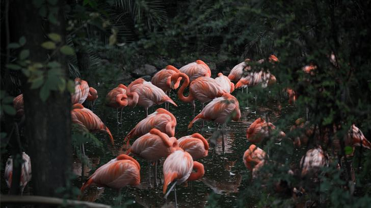 group of pink flamingo Mac Wallpaper