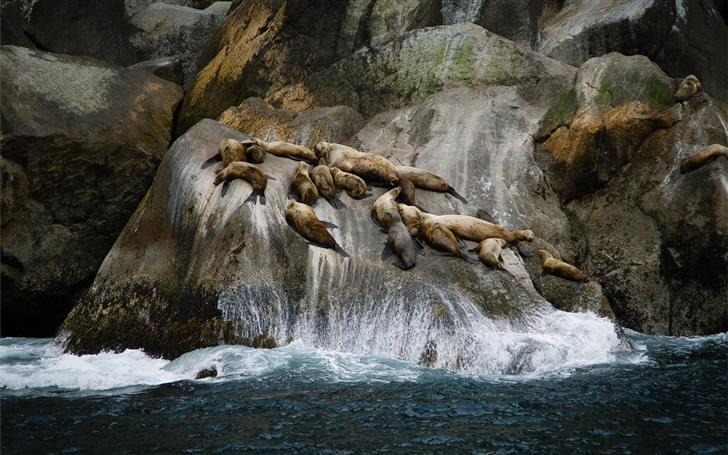 group of sea lions on rock formation near sea duri Mac Wallpaper