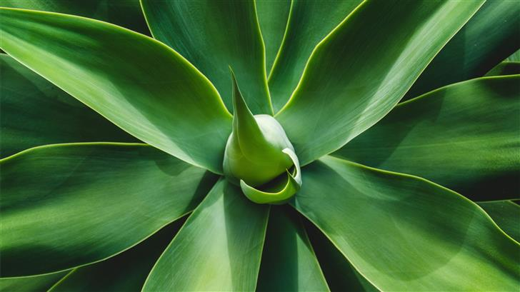 green leafed plant Mac Wallpaper
