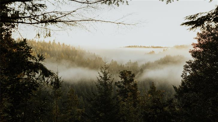 pine trees covered with fog Mac Wallpaper
