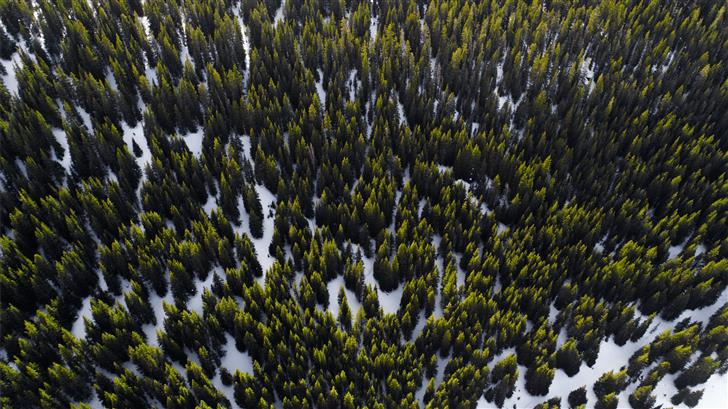 aerial photography of trees in winter at daytime Mac Wallpaper