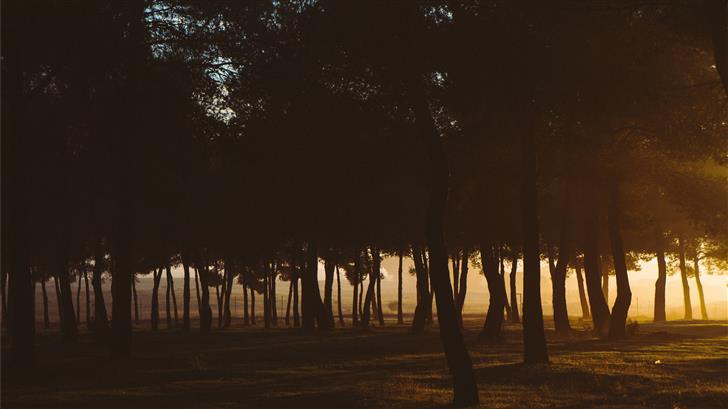 trees during sunset Mac Wallpaper