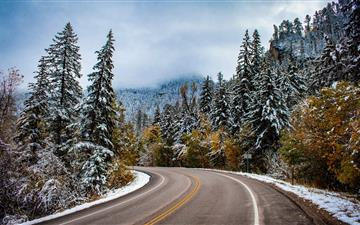 gray concrete road surrounded by pine trees All Mac wallpaper