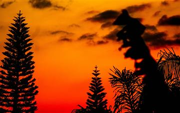 silhouette photo of trees during golden hour All Mac wallpaper