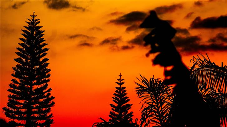silhouette photo of trees during golden hour Mac Wallpaper