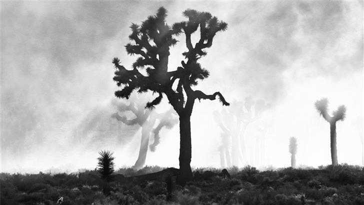 silhouette of trees Mac Wallpaper