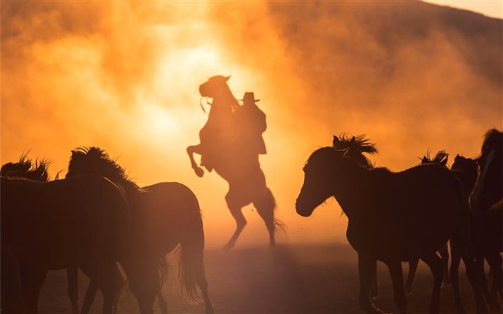 silhouette photography of horses Mac Wallpaper