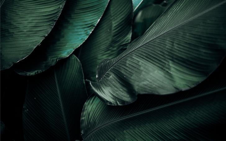 green leaves macro photography Mac Wallpaper