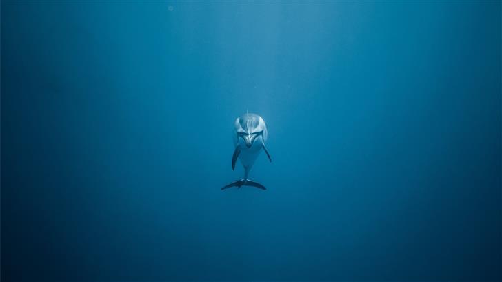 gray dolphin underwater Mac Wallpaper