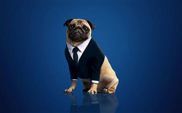 frank the pug men in black international 2019 All Mac wallpaper