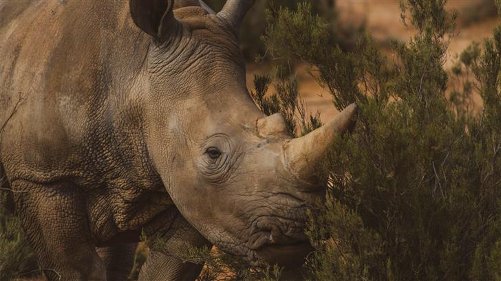 brown rhino standing near grass Mac Wallpaper