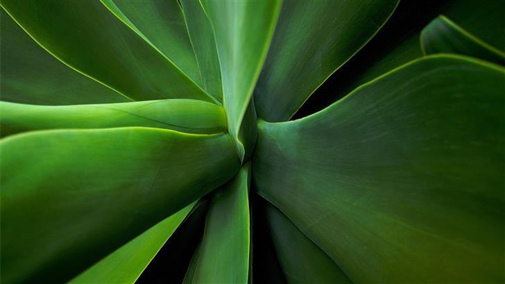 macro photography of plants Mac Wallpaper