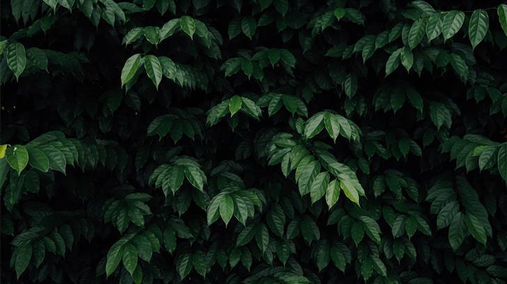 green leafed tree Mac Wallpaper